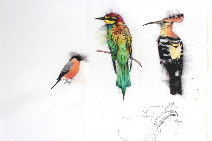 Rough Drawing of Birds