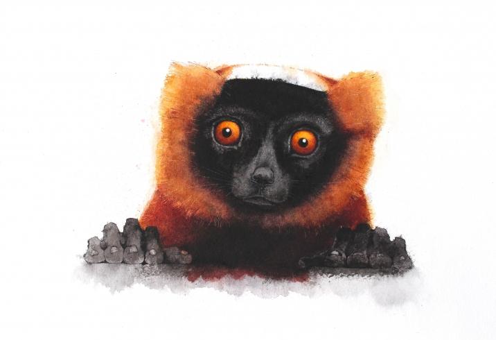 Oscar Lemur